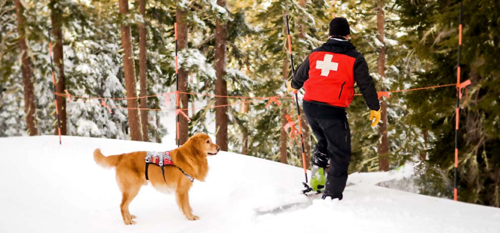 Italian Red Cross canine rescue unit